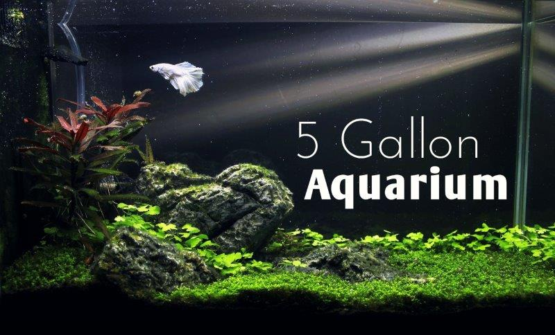 5GallonAquariumReviewHeader800x600 – Copy