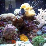 Phase 3 aquarium