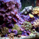 Phase 3 aquarium v3
