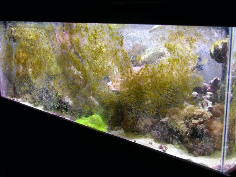 Saltwater Algae You Dont Want And How To Prevent It
