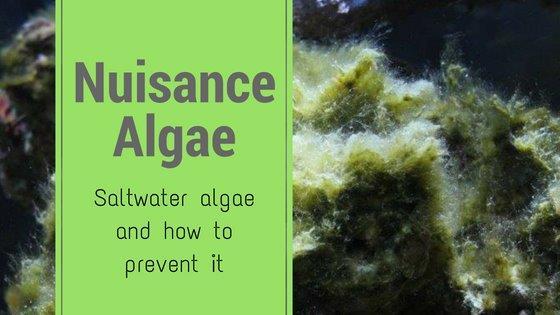 NuisanceAlgaeBlogIcon