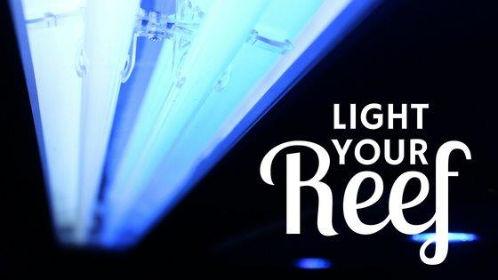 Light Your Reef Blog Icon