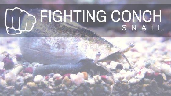 FightingConch_BlogIcon