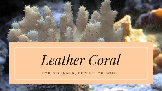 LeatherCoral_BlogIcon